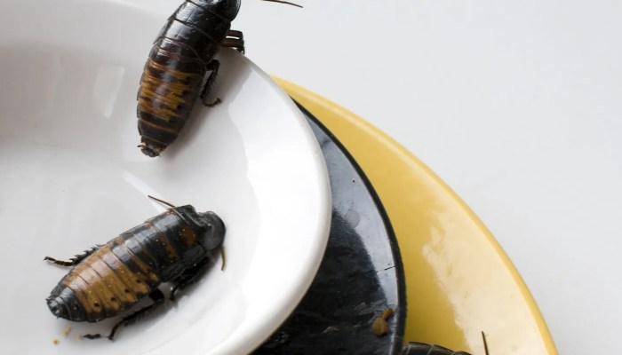 Man in Engeland bijt in kakkerlak