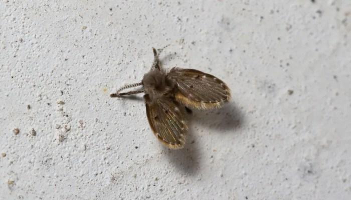 Motmuggen in je huis