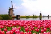 Qué hacer en Amsterdam y alrededores