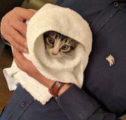 Un gato en adopción: Opel encuentra su hogar