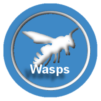 wasp control - wasp nest removal