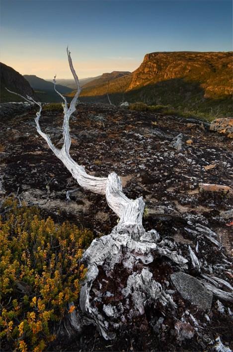 Bleached-tree-bone-On-Landscape
