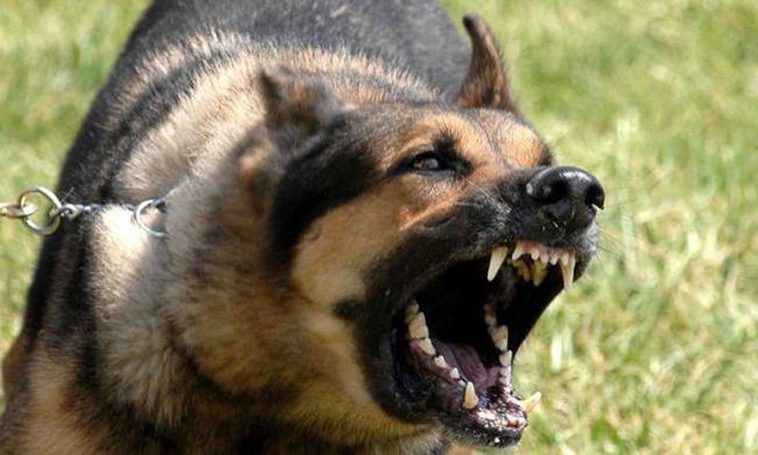 Στο νοσοκομείο Λαρισαίος μετά από επίθεση αγέλης σκύλων - Τραύματα και στα δυο του πόδια