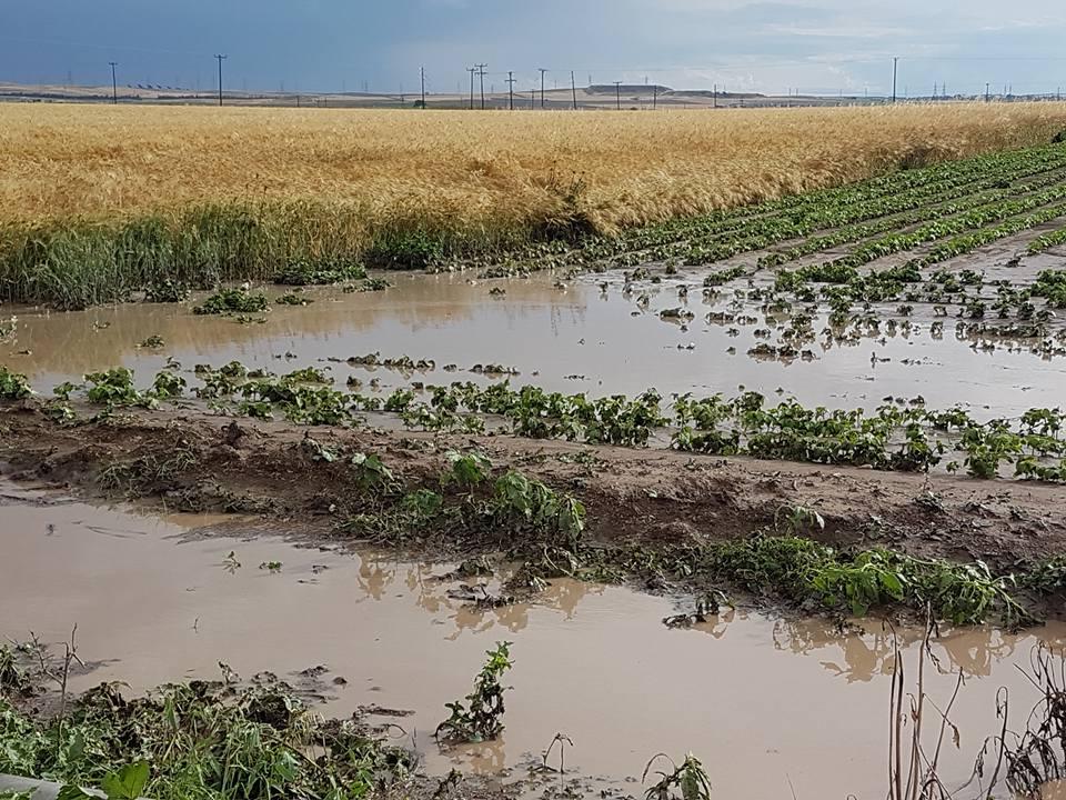 """""""Πνίγηκαν"""" χιλιάδες στρέμματα καλλιεργειών στους δήμους Φαρσάλων και Κιλελέρ - Δείτε φωτογραφίες"""