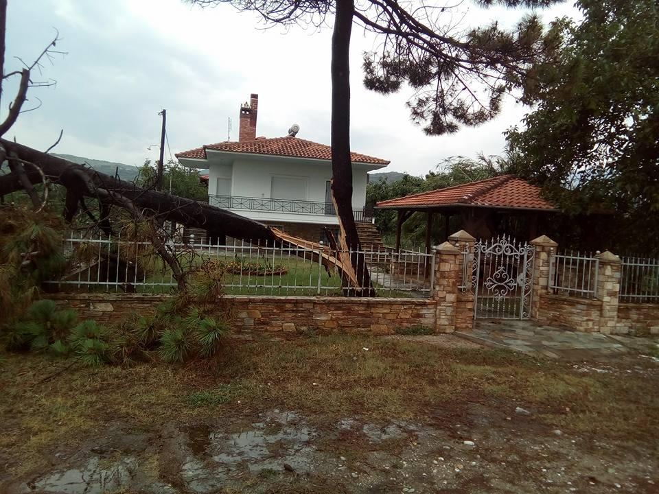 Καταστροφικό μπουρίνι στα παράλια της Αγιάς - Κόπηκαν δέντρα, πλημμύρισαν δρόμοι (φωτό)