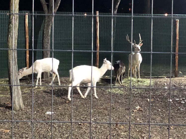 """Φιλοζωική καλεί Εισαγγελέα για τα ελάφια στο """"Πάρκο των Ευχών"""" στο Αλκαζάρ!"""