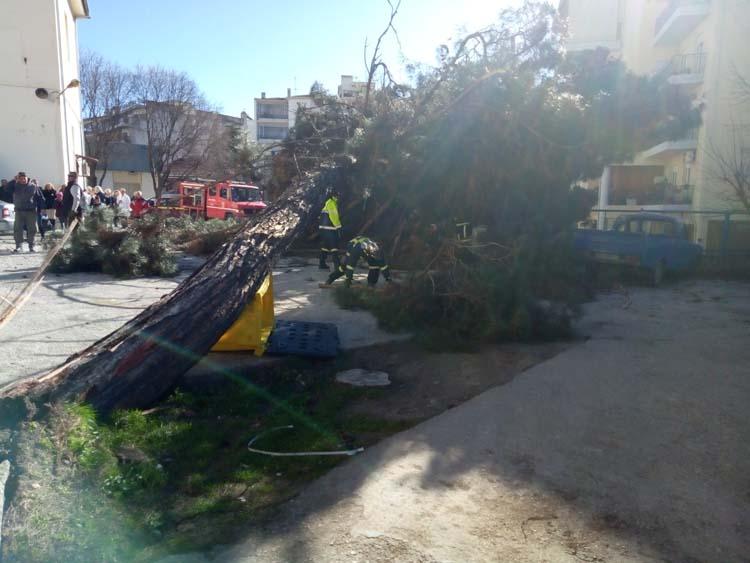 Απίστευτες εικόνες: Θηριώδες δέντρο έπεσε πάνω σε αυτοκίνητα μέσα στο νοσοκομείο της Λάρισας!