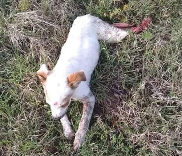 Σχολικό λεωφορείο παρέσυρε και εγκατέλειψε σκυλάκι στη Λάρισα μπροστά στα μάτια παιδιών (φωτό)