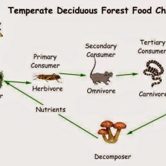 Deciduous Forest Food Chain Diagram 4 Way Switch With Dimmer Wiring The Energy Paths Through Living Organisms In Chains And Webs | Science Online