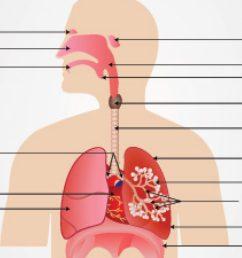 diagram of respiratory system nose [ 1280 x 720 Pixel ]