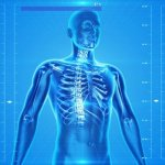 Learn About the Anatomy and Physiology of the Human Body