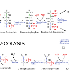 enzymatic diagram of glycolysis best wiring diagram enzymatic diagram of glycolysis [ 3533 x 2067 Pixel ]
