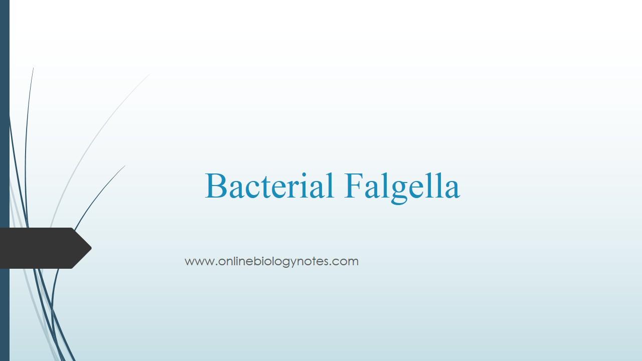 hight resolution of diagram of flagella