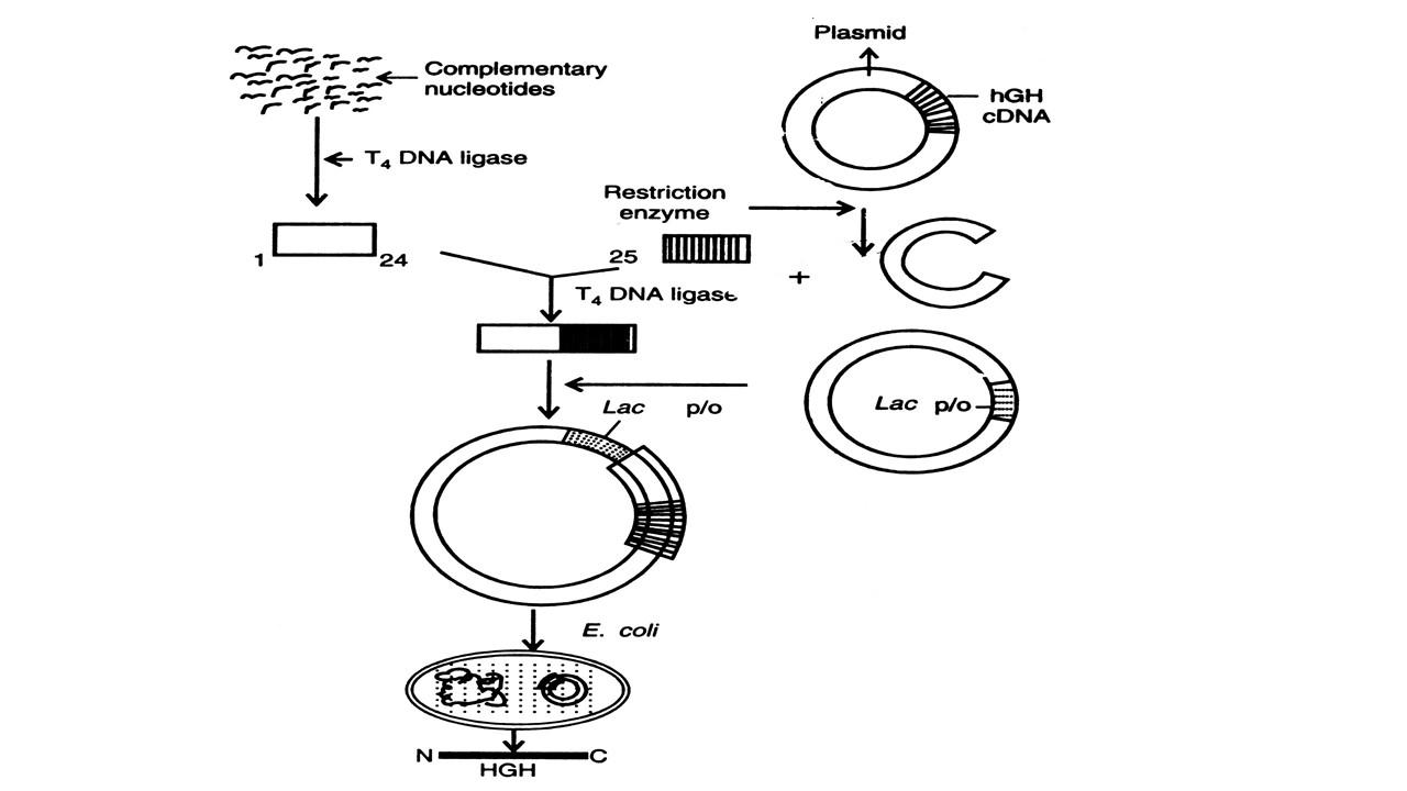 genetic dna diagram
