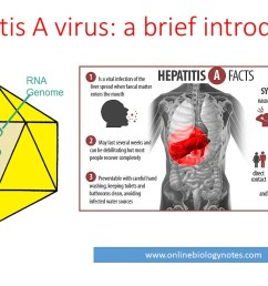 hepatitis a virus hav properties classification mode of transmission pathogenesis clinical features and laboratory diagnosis online biology notes [ 1280 x 720 Pixel ]