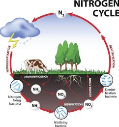 nitrogen cycle steps of nitrogen cycle online biology notes easy diagram of the nitrogen cycle [ 1200 x 1270 Pixel ]