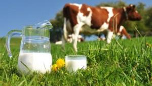 Lapte Natural de Vaca