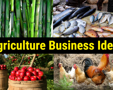 Lucrative Agricultural Business Ideas