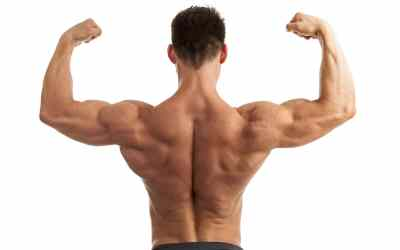 How To Lose Fat Not Muscle