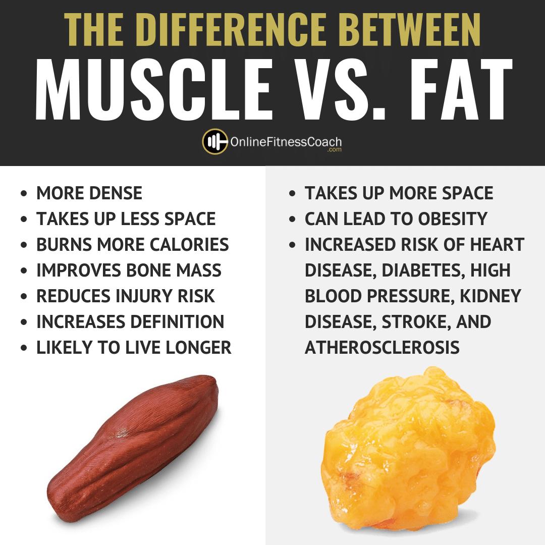 MUSCLE VS. FAT