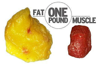 Muscle vs. Fat: What's The Difference?