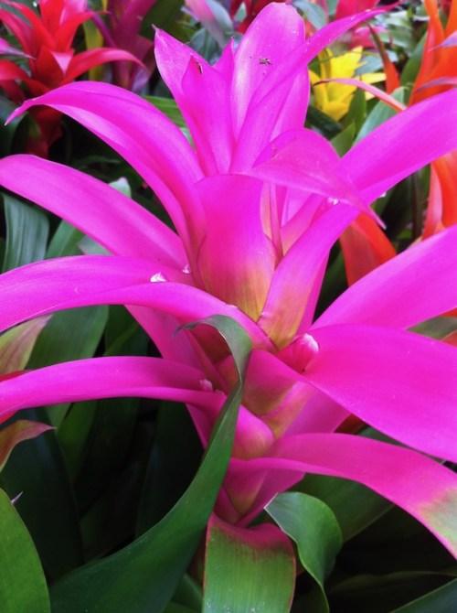Bromeliad https://www.onlineflowergarden.com
