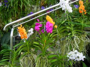 Orchids 2016 at Kew Gardens