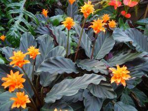 Bromeliads Kew Gardens