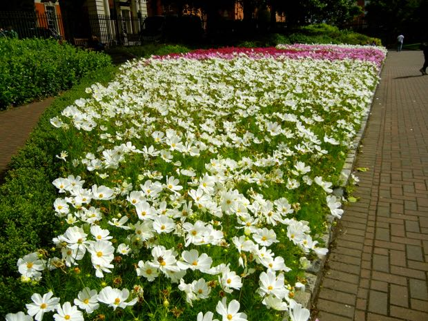 St. Patrick's Park, Cosmos