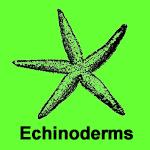 Echinoderm Fossils