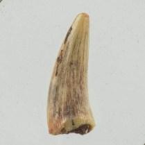 3021 DSC_1851