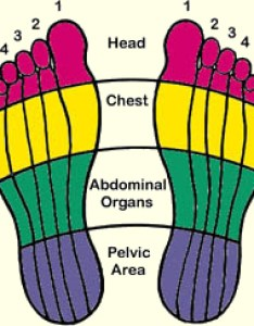 Zone therapy also reflexology  holistic training courses rh onlinehomestudies