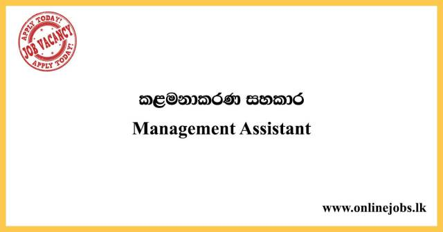 Management Assistant