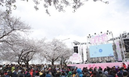 ENJOY FLOWERS AT YEONGDEUNGPO YEOUIDO SPRING FLOWER FESTIVAL!