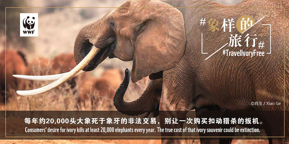 TAT supports WWF-Thailand's no ivory Campaign