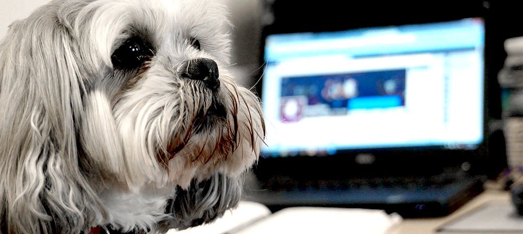 Bring-your-dog-to-work-day-why-your-business-should-allow-dogs