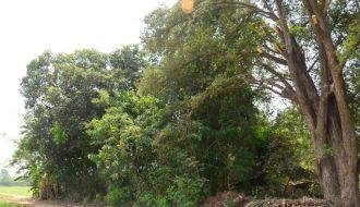 tree value250520