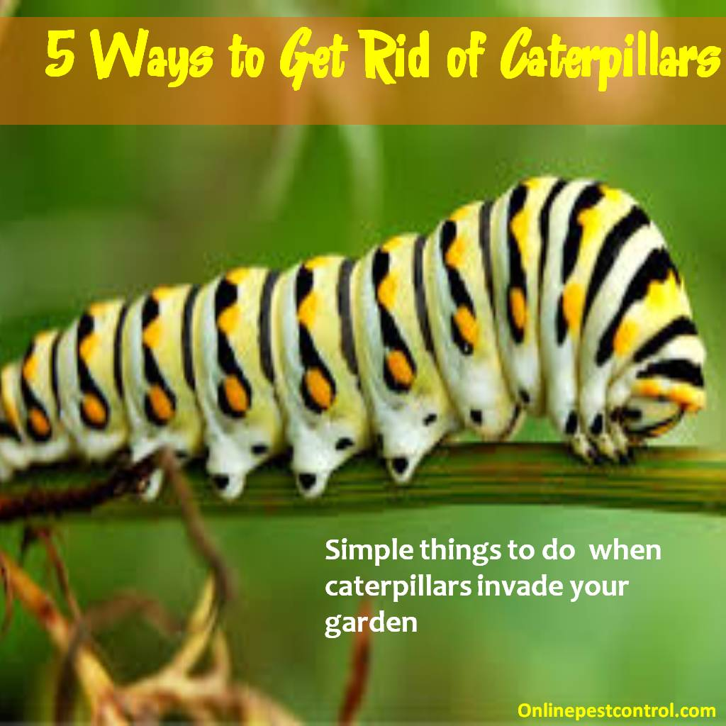 5 Ways to Get Rid of Caterpillar