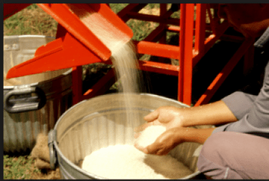AMAZING FACTS ABOUT ABAKALIKI RICE | HOW TO BUY ABAKALIKI RICE
