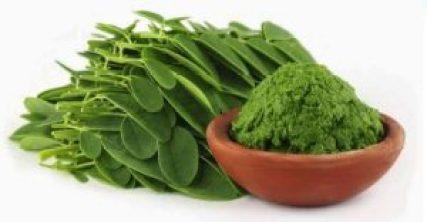 Health Benefits Of Moringa |  Importance Of Moringa