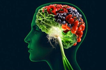 Best Food For Brain Function