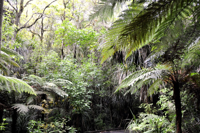 Ecological Significance at Waipoua Forest