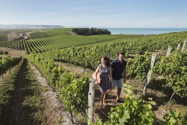 Explore the Local Wineries