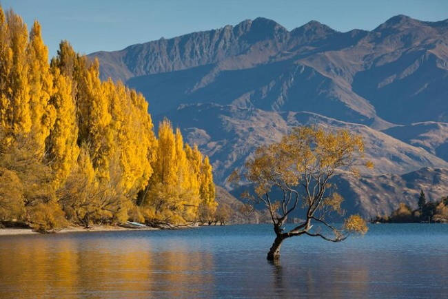 Wanaka-10 Natural Destinations to Explore in New Zealand