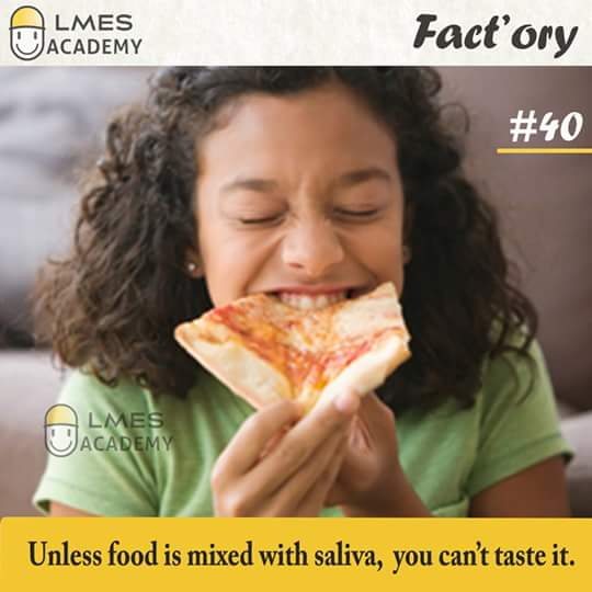 #40 Unless food is mixed with saliva, you can't taste it.