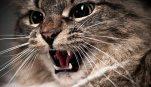 pisici stresate