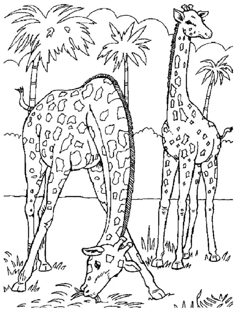 realistic animals coloring pages | Only Coloring Pages | free coloring pages animals realistic