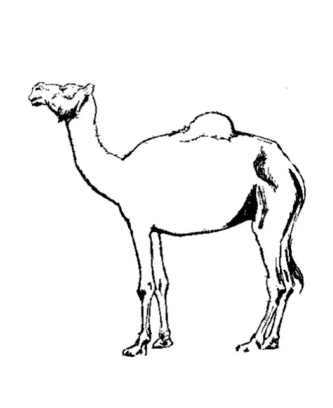 for kids Free Printable Camel Coloring Pages For Kids