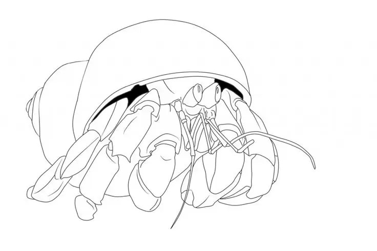 easy Free Printable Hermit Crab Coloring Pages For Kids