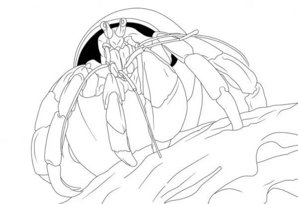 hermit crab coloring page # 52